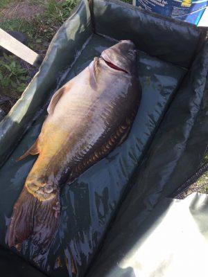 a kíméletes bánásmód, a kis Blero halaival és bármely más vízben élő hallal szemben elengedhetetlen